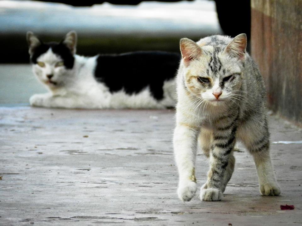 stray-cat-175733-960-720.jpg